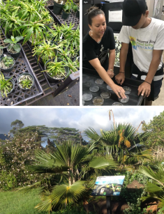 NPLD workday participants will enjoy a tour of the Army's seed lab, rare plant nursery and native Hawaiian interpretive garden.